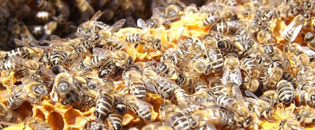 Resultado de imagem para Univasf sediará Workshop sobre importância das abelhas para a economia do Vale do São Francisco.